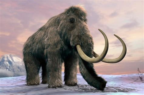 Woolly Mammoths Wiped Out by Grass Invasion?