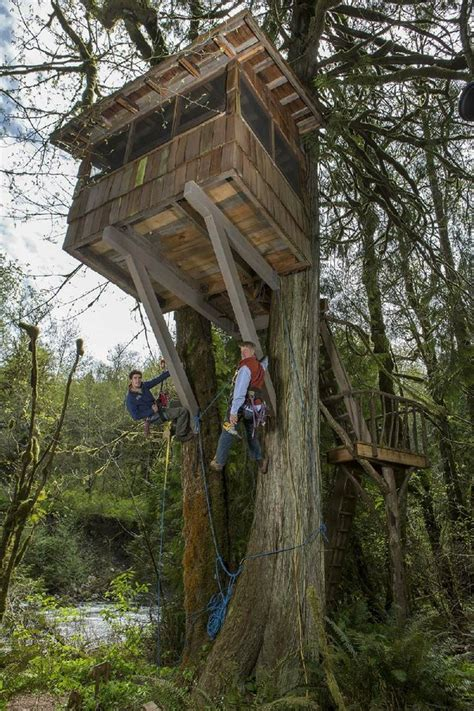 THE TV COLUMN: Animal Planet has designs for Treehouse Masters