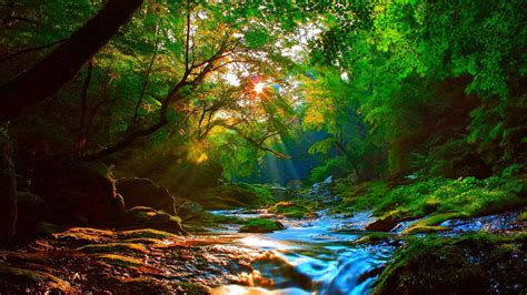 Sunrise Beautiful Mountainous River Forest With Green