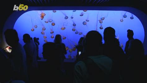 Travelers Can Swim with Jellyfish Again at Palau's Famous