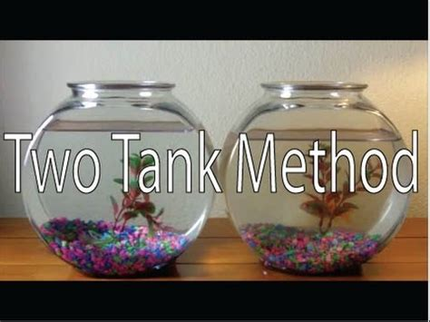 ONLY way to Clean a Goldfish Bowl DIY Two Tank Method How