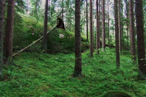 Travel Reportage of a Sister City: Helsinki, Finland