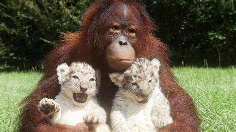 18 Animals You Won't Believe Are Best Friends - YouTube