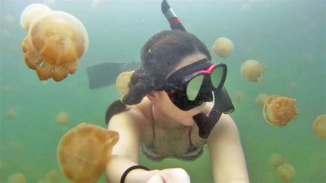 A mesmerizing freedive in Jellyfish Lake with a GoPro