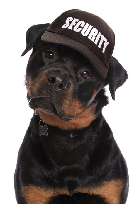 How Pets Affect Security Services   NMC Central