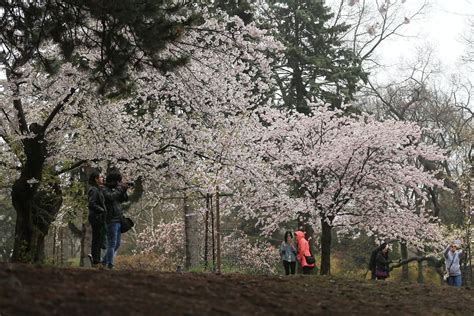 Missing the High Park cherry blossoms? Watch the city's